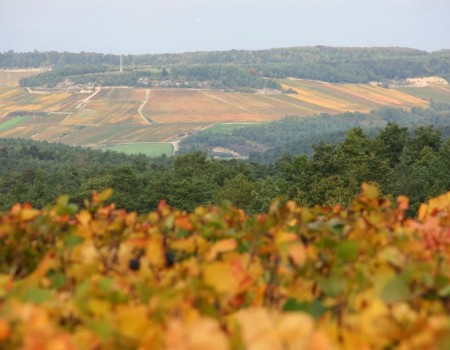 Vineyard Cote des Bar – autumn